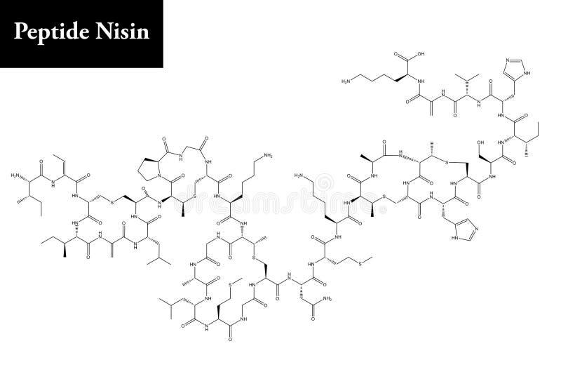 肽乳酸链球菌肽分子结构  免版税库存图片