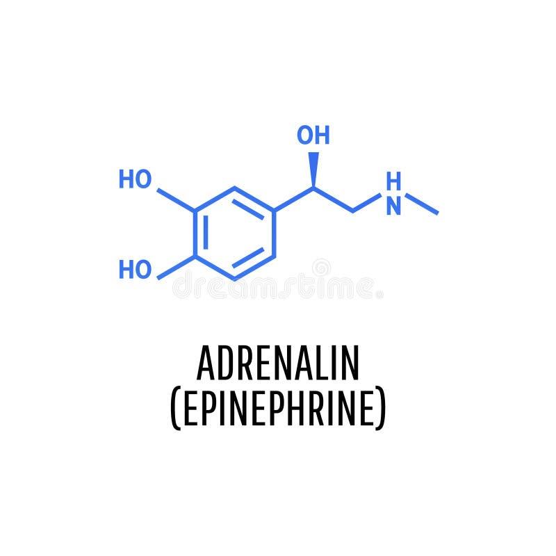 肾上腺素肾上腺素,肾上腺素分子 库存例证