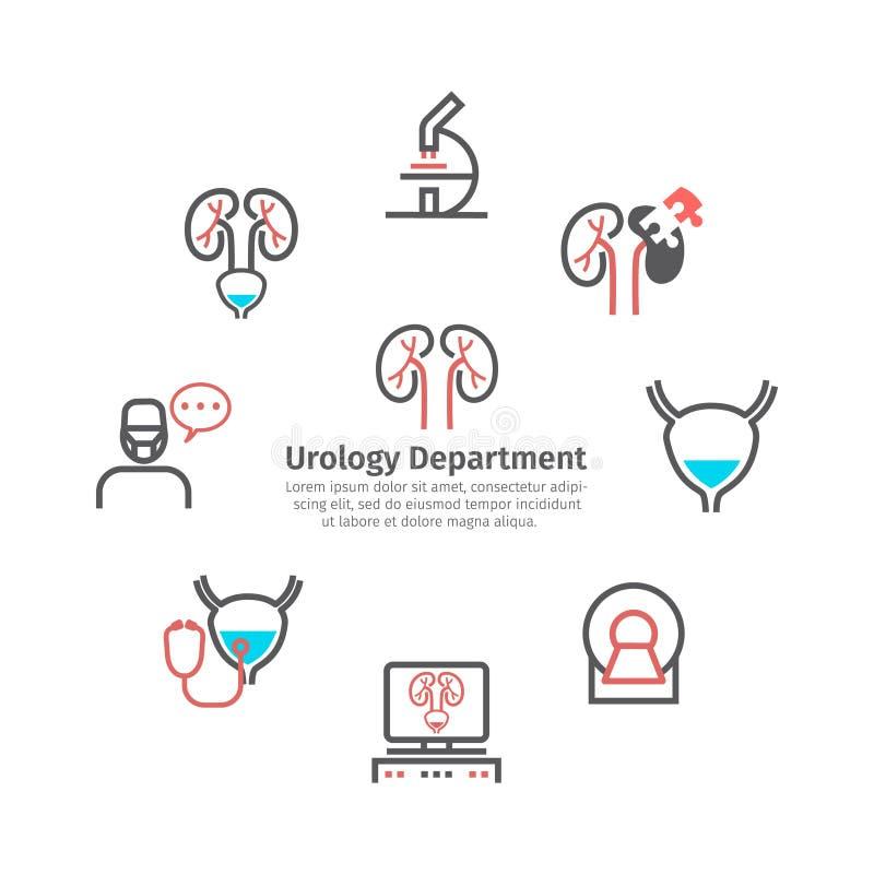 肾脏标志横幅 泌尿科 线被设置的象 网图表的传染媒介标志 向量例证