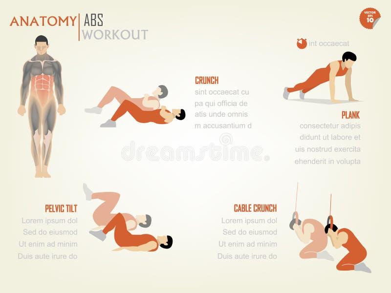 胃肠吸收核心身体锻炼美丽的设计信息图表包括咬嚼 向量例证