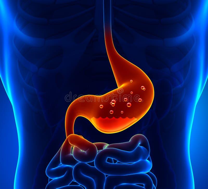 胃酸 库存例证
