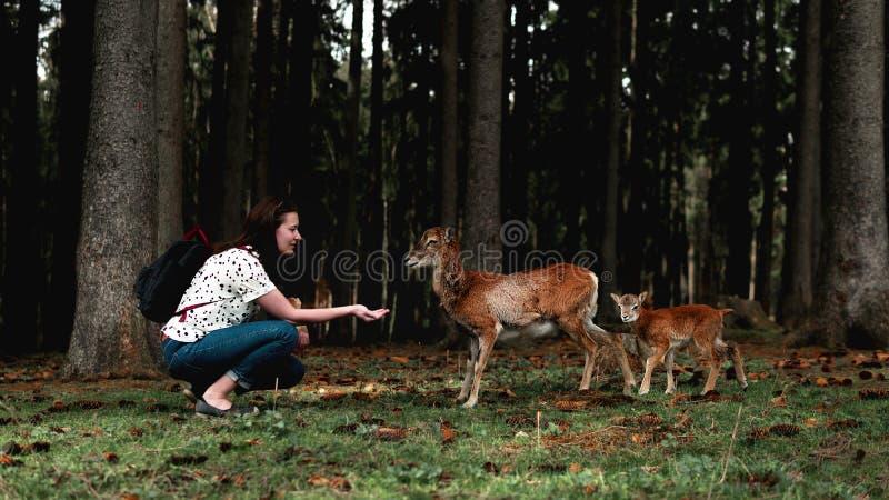 背包徒步旅行者女孩喂养令人惊讶的野生鹿 库存图片