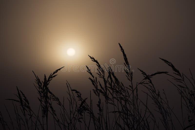 背后照明wheatfield早晨有雾的 免版税库存图片
