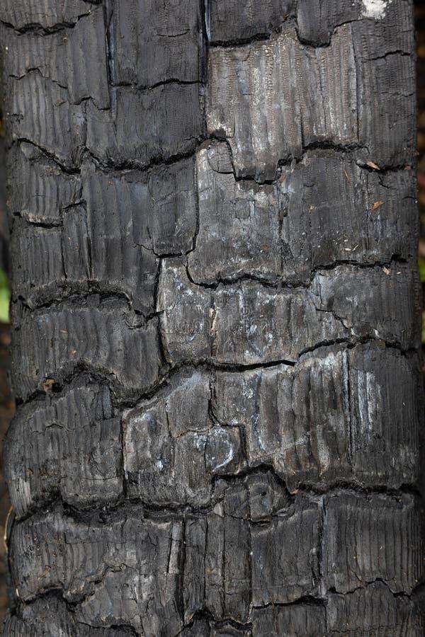 背景、背景、纹理黑被烧焦的木材、木头,煤炭在火以后,抽象和在木炭镇压  免版税库存图片