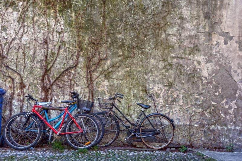 背景中覆盖干常春藤的老墙上的自行车画 免版税库存照片