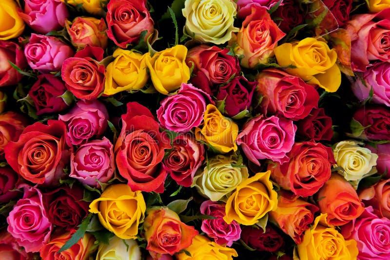 背景五颜六色的玫瑰 免版税库存图片