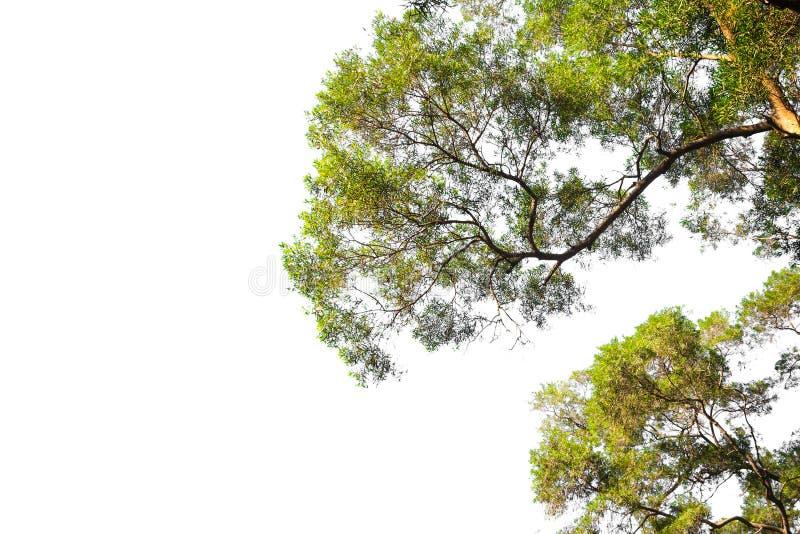 背景例证图象查出的结构树向量白色 分支树框架 库存图片