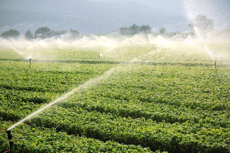 背景农厂灌溉系统 免版税库存照片