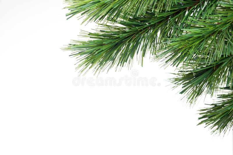 背景分行圣诞树 库存照片
