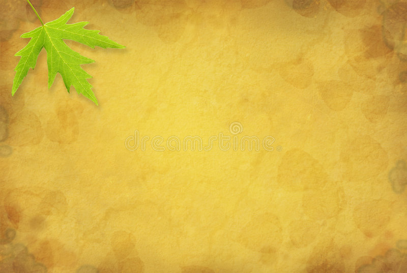 背景叶子槭树 免版税图库摄影
