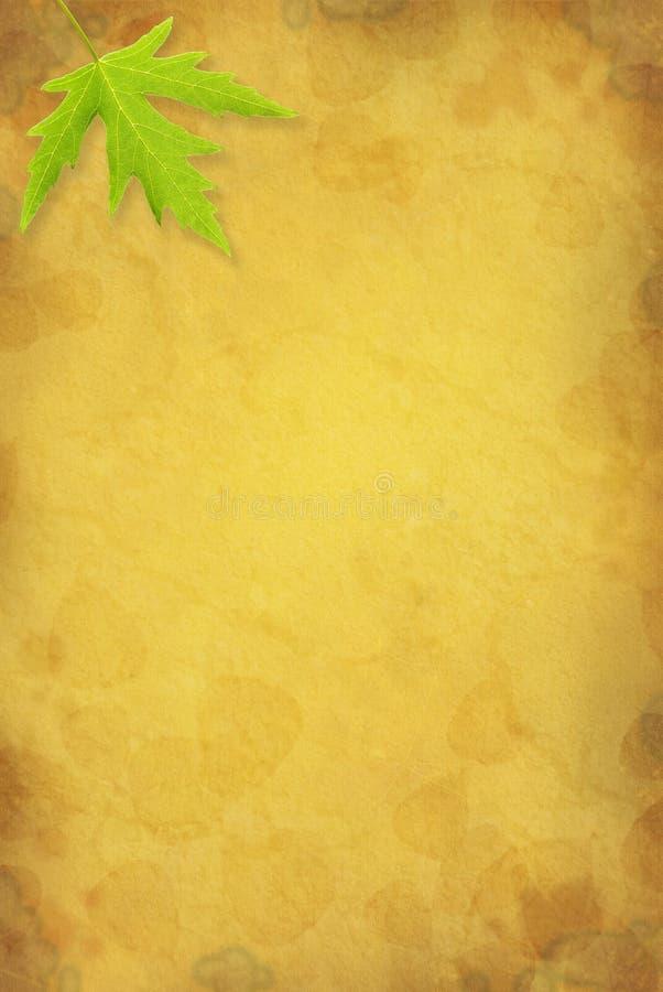 背景叶子槭树 图库摄影