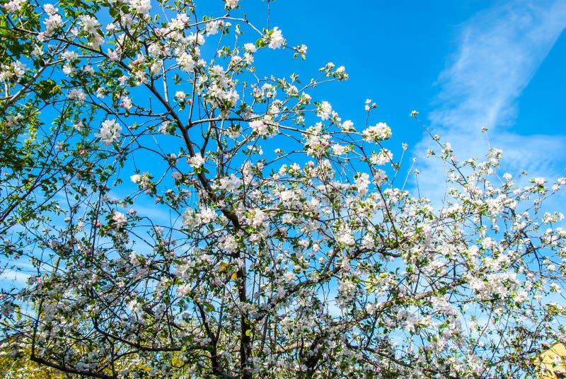 背景叶子绿色梨梨红色结构树 免版税库存图片