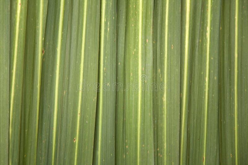 背景叶子phormium 图库摄影
