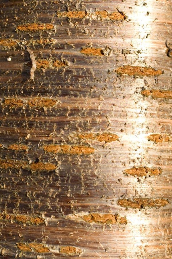 背景吠声自然纹理结构树 免版税库存照片