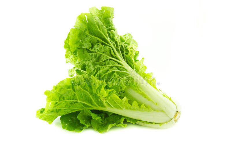 背景圆白菜中国白色 图库摄影