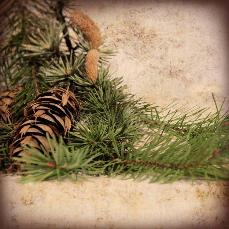 Download 背景圣诞节葡萄酒 库存照片. 图片 包括有 背包, 羊皮纸, 土气, 圣诞节, 工厂, 冷杉, 构成, 结构树 - 22358398