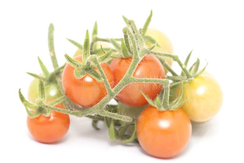 背景在蕃茄白色的分行樱桃 免版税库存图片
