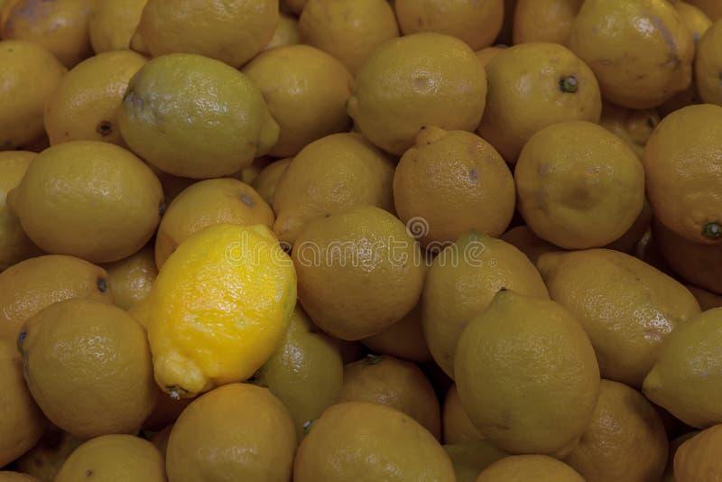 背景基本的对比阴影基地使变暗的果子柠檬聚焦太阳光芒特别拷贝空间 免版税库存图片