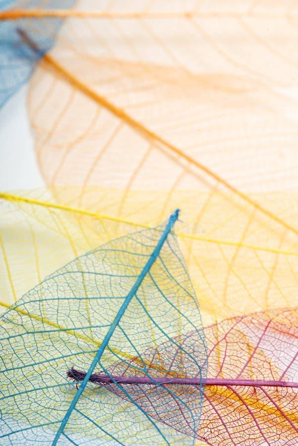 背景多色的叶子 免版税图库摄影
