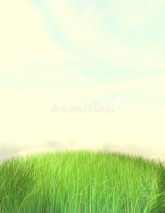 背景好草的草坪 库存图片