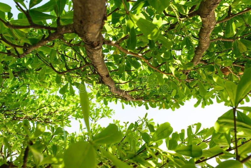 背景射线关闭砍伐结构树 图库摄影