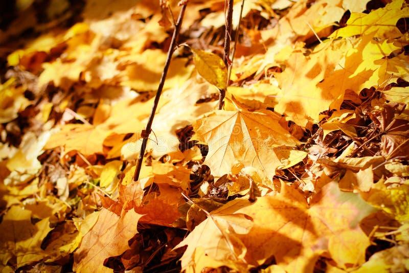背景小组秋天金子,桔子叶子 室外 库存图片