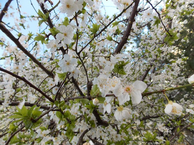 背景开花叶子橙树 库存照片