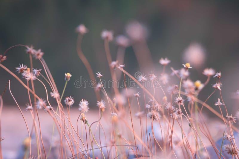 背景微小的花晚上 图库摄影