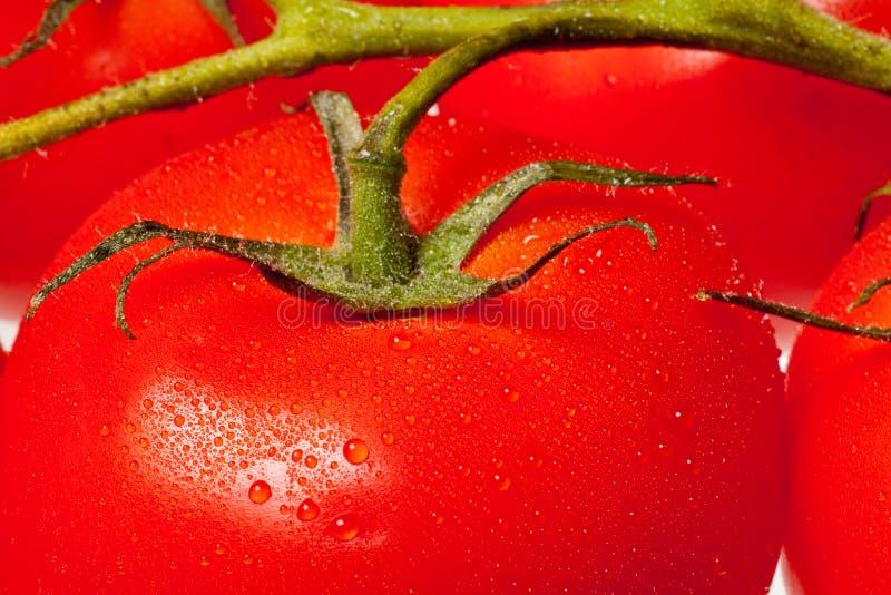 背景成熟蕃茄 库存照片
