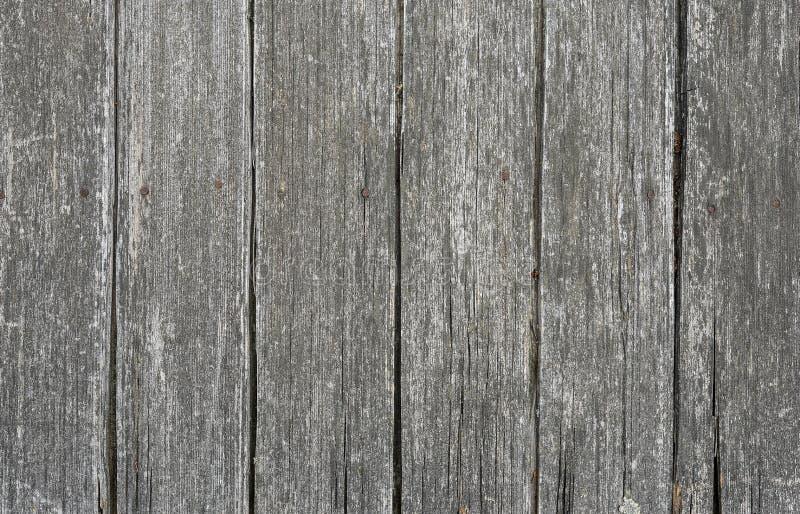 背景或大模型的木纹理 老灰色木纹理关闭 谷仓墙壁纹理或土气篱芭浅灰色的平的木头 图库摄影
