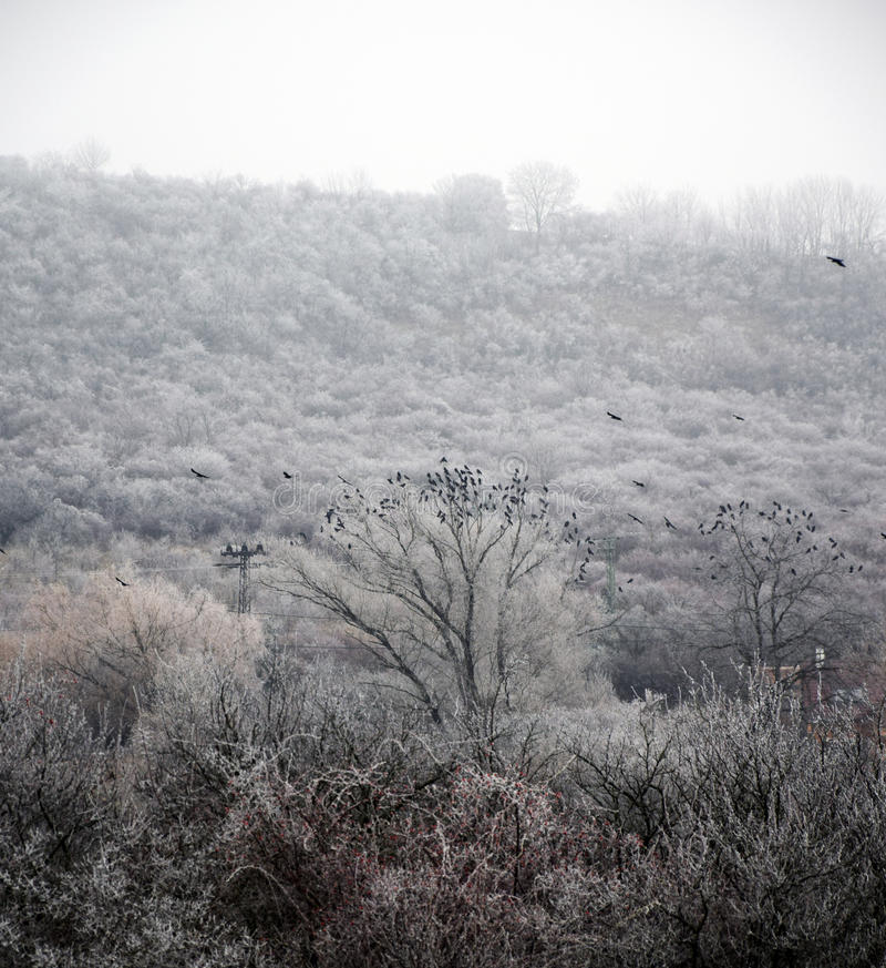 背景捷克最高的横向山snezka冬天 图库摄影
