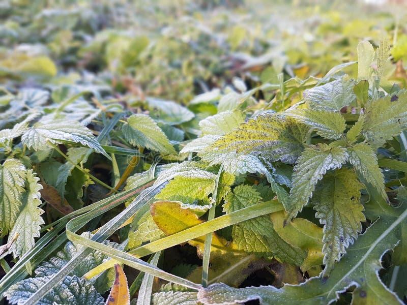 背景接近的本质种植事宜 免版税库存照片