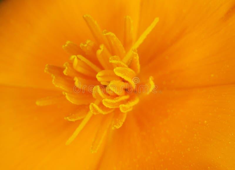 背景接近的花一点橙色  免版税库存图片