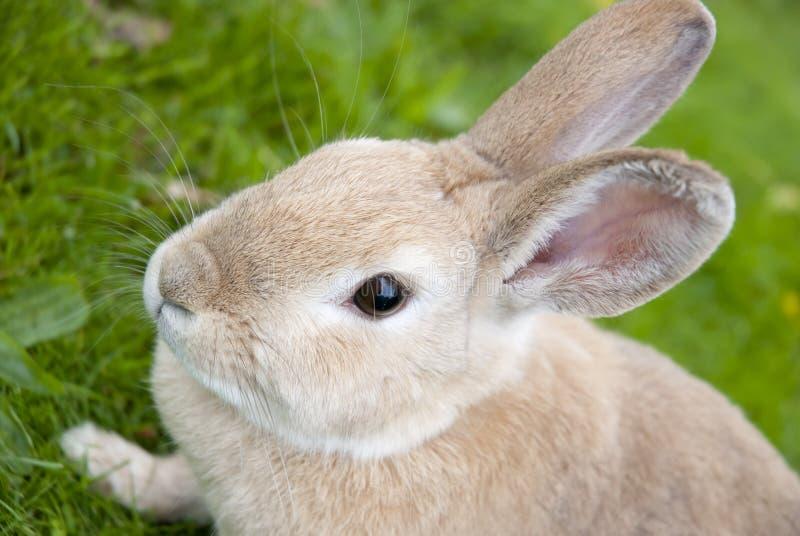 背景接近的defocused兔子 免版税库存照片