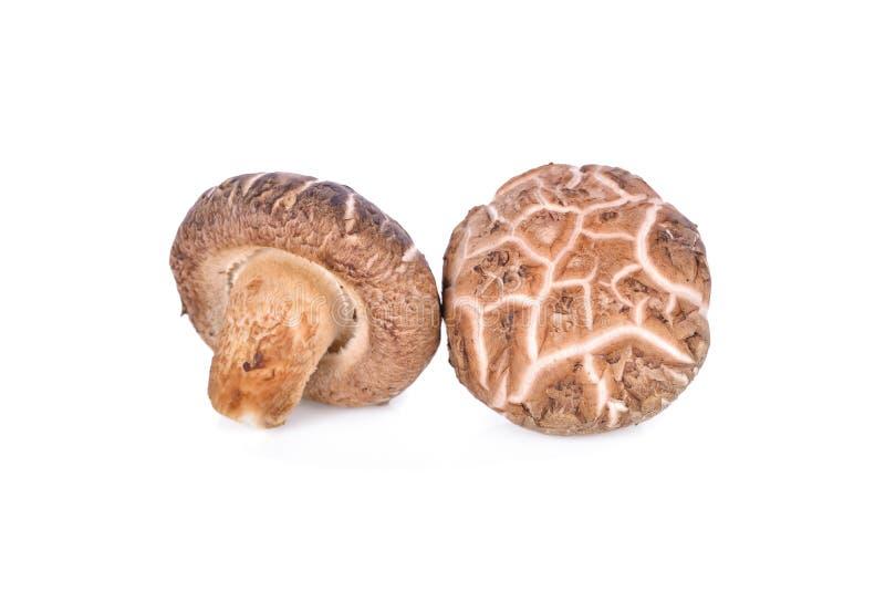 背景新蘑菇椎茸白色 库存照片