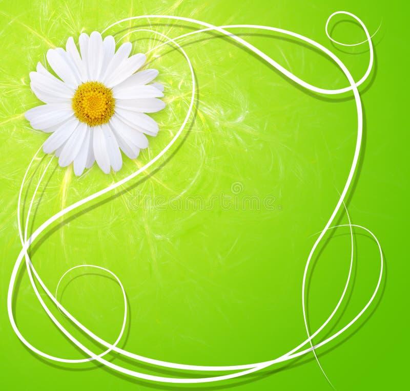 背景新鲜的延命菊 向量例证