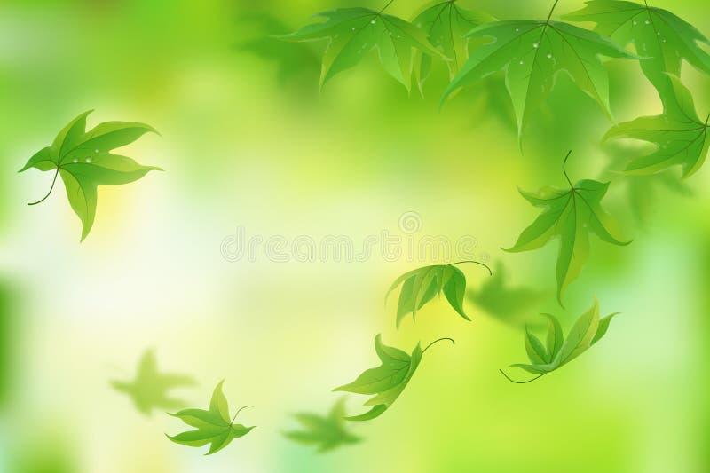 背景新鲜的绿色叶子 皇族释放例证