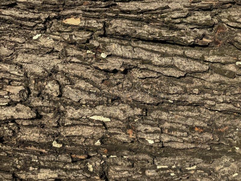 背景无缝的树皮纹理  库存照片