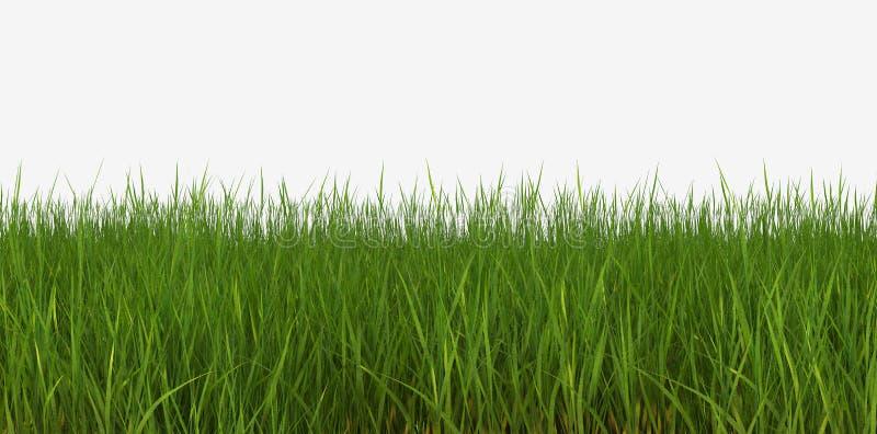 背景曲线草查出草坪透视图白色 向量例证