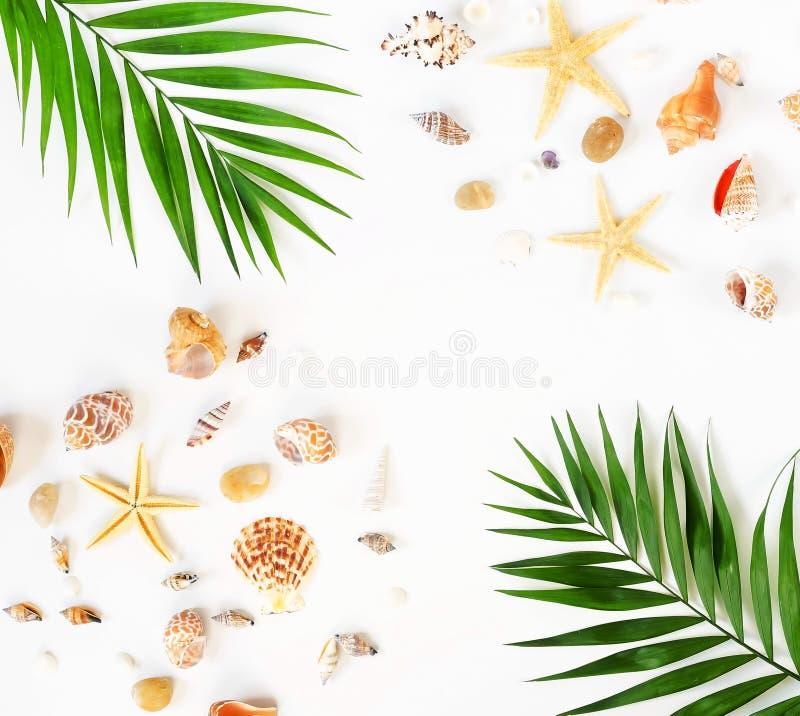 背景更多我的投资组合旅行 海壳、星和棕榈的样式分支 库存图片