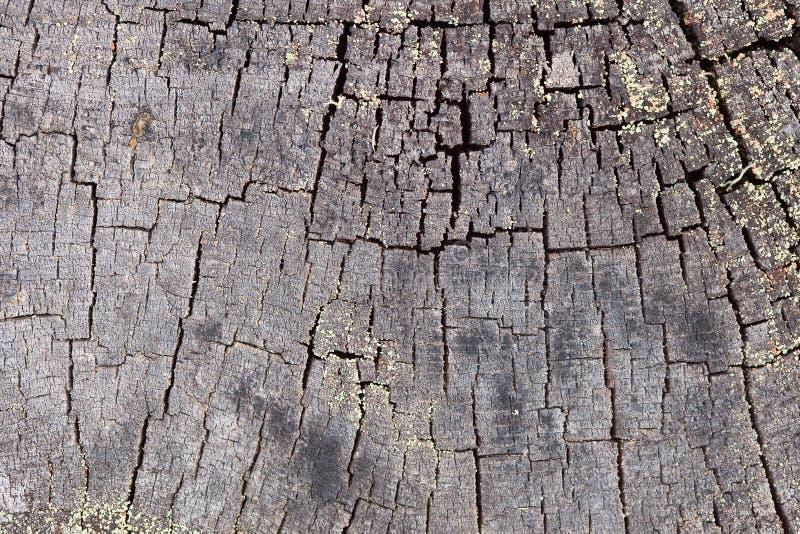 背景末端表面腐烂日志的杉木 免版税图库摄影
