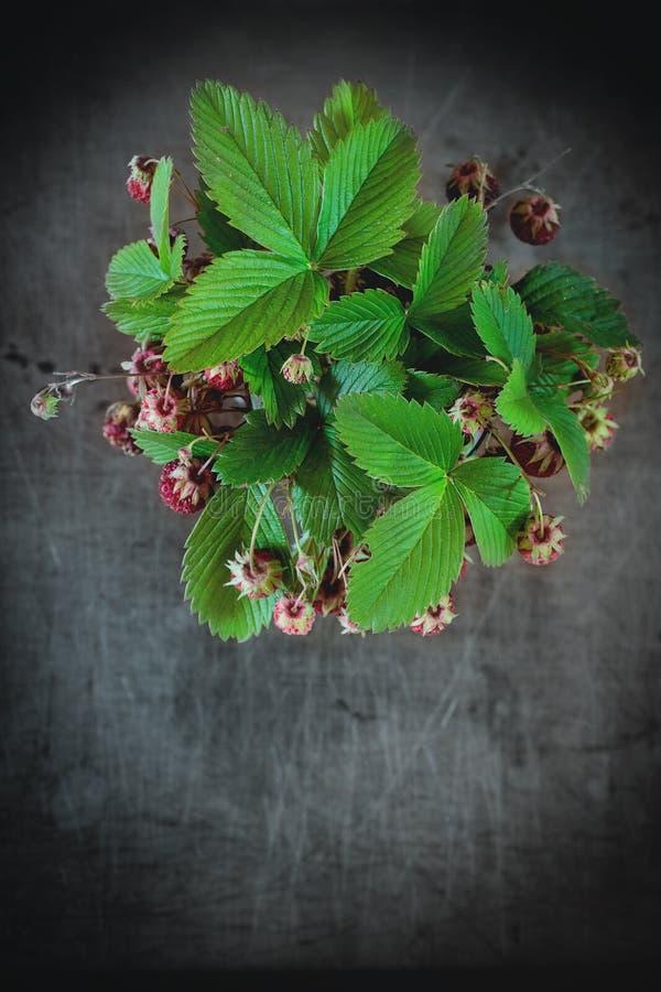 背景束集中前面查出一空白的草莓 库存图片