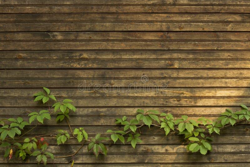 背景板和常春藤葡萄酒 免版税库存照片