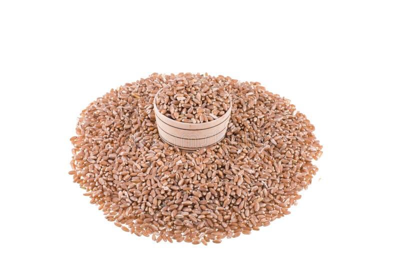 背景查出的宏观射击麦子白色 免版税库存照片