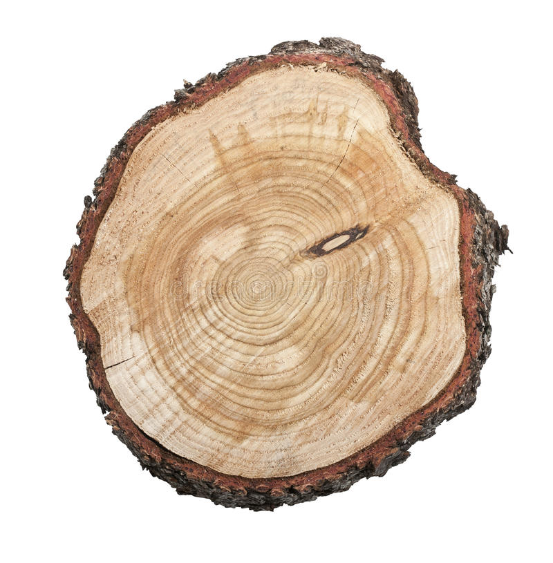 背景查出的树桩结构树白色 免版税库存图片
