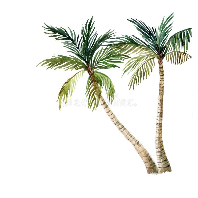 背景查出的棕榈树白色 水彩 库存例证