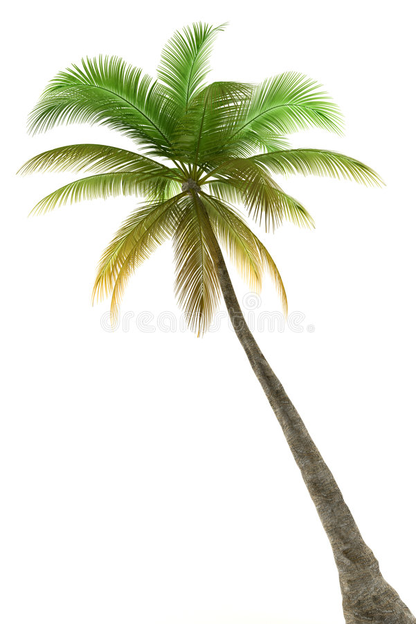 背景查出的棕榈树白色 免版税库存照片