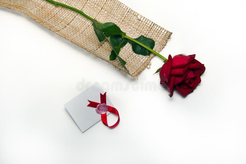 背景查出的红色玫瑰白色 库存图片