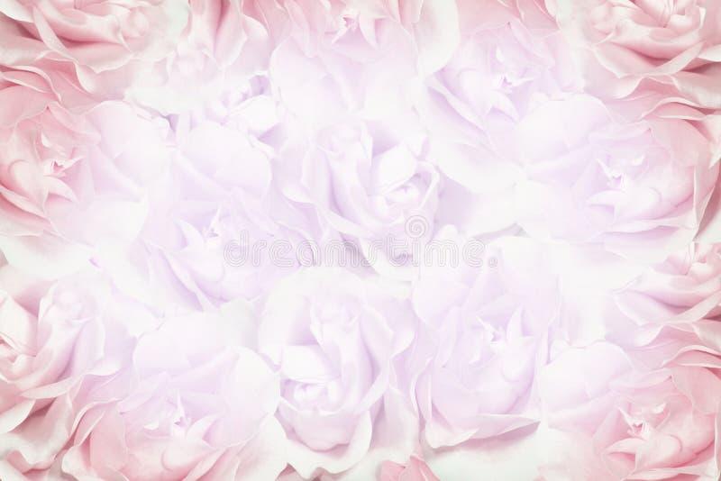 背景桃红色玫瑰 免版税库存照片