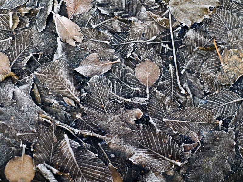 背景棕色结霜的叶子 图库摄影